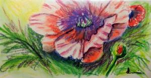 775 Le pavot, pastel sur papier aquarelle Catiera Magnani, 4.5x9po